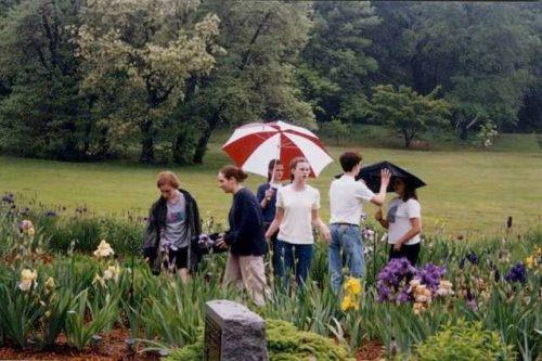 garden-in-rain