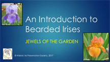 Intro to Bearded irises thumbnail