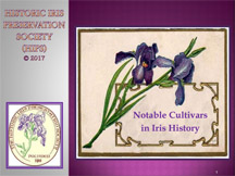 Notable Cultivars in Iris History thumbnail