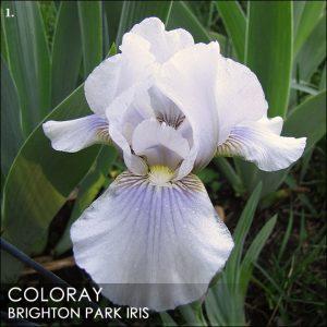 coloray BPI01