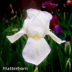 matterhorn-lm.jpg