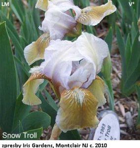 snow-troll-lm